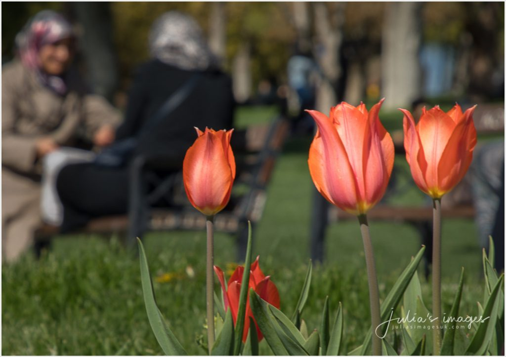Home of Tulips